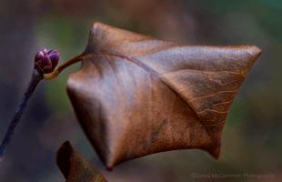 Photo Lilac Bud by David McCammon Photography